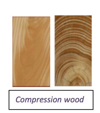 compressionwood