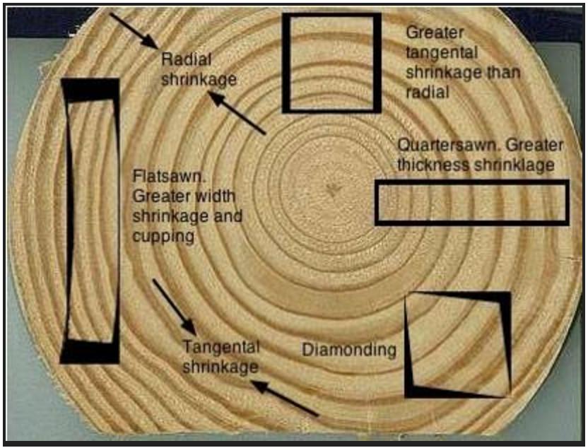 Water Mold Diagram Moisture content in lu...