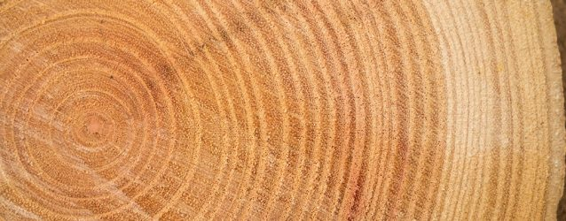 Density of Wood Blog